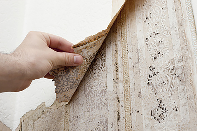 mould on wallpaper